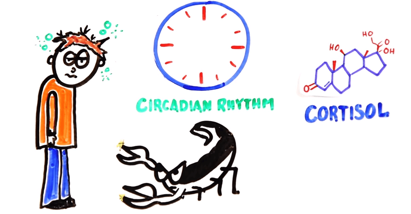 Coffee and Circadian rhythm cortisol production